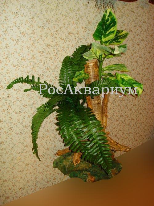 Фото коряги корни ореха с растениями